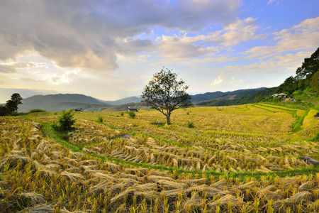 chaingmai: The beautiful sunset at Terraced Paddy Field in Mae-Jam Village , Chaingmai Province