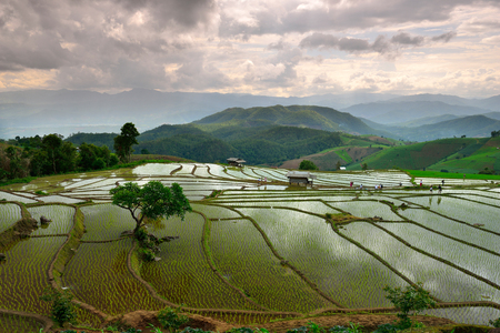 Rice terraces Doi Inthanon in Chiang Mai, Thailand. Stock Photo