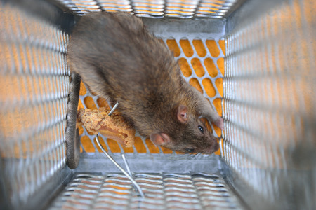 entrapment: Rat in a trap.