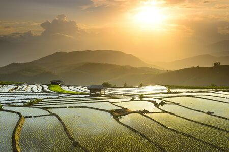Rice terraces Doi Inthanon in Chiang Mai, Thailand. Zdjęcie Seryjne