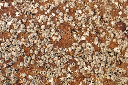 Texture Coral Stone Imagens