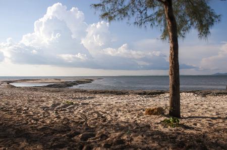 Trees seaside