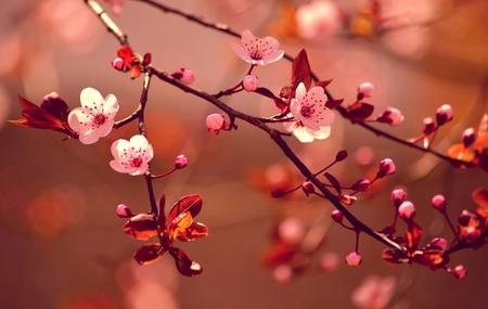 Blumen auf Ästen wachsen