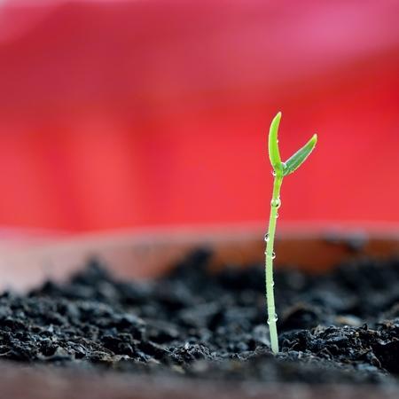 germination: Germination