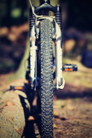 mtb: Mountain bike in the woods. Sport in nature.