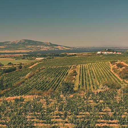 Vineyards under Palava. Czech Republic - South Moravian Region wine region.