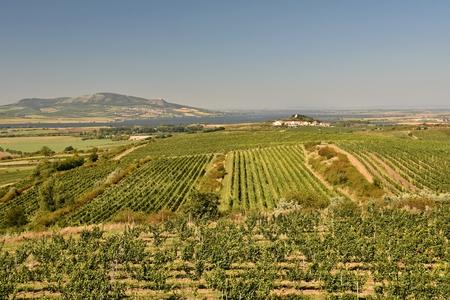 moravia: Vineyards under Palava. Czech Republic - South Moravian Region wine region.
