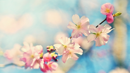 arbol de pascua: Beautiful blossom tree. Nature scene with sun in Sunny day. Spring flowers. Abstract blurred background in Springtime.