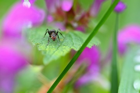 Beautiful macro shot of ant on leaf in grass. Natural colorful background. Imagens