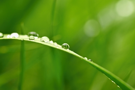 Spring. Beautiful natural background of green grass with dew and water drops. Seasonal concept - morning in nature.