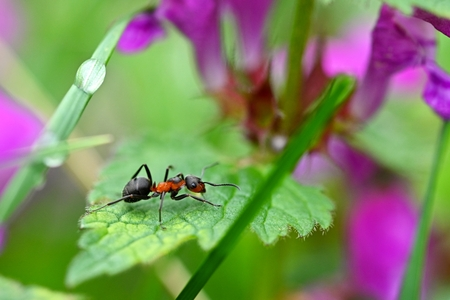 Beautiful macro shot of ant on leaf in grass. Natural colorful background. Zdjęcie Seryjne