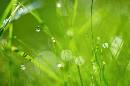 Green nature. Beautiful close up photo of nature. Green grass with dew drops. Colorful spring background with morning sun and natural green plants landscape, ecology, fresh wallpaper concept with copy space.
