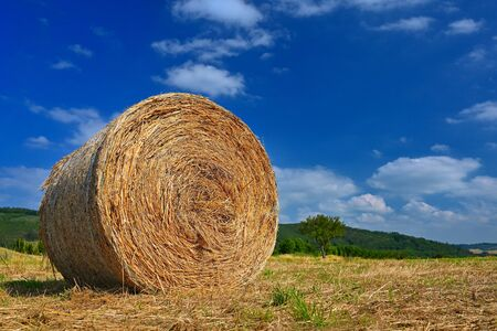 Beautiful summer landscape. Agricultural field. Round bundles of dry grass in the field with bleu sky and sun. Hay bale - haystack. Reklamní fotografie