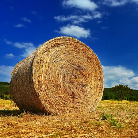 Beautiful summer landscape. Agricultural field. Round bundles of dry grass in the field with bleu sky and sun. Hay bale - haystack. Foto de archivo