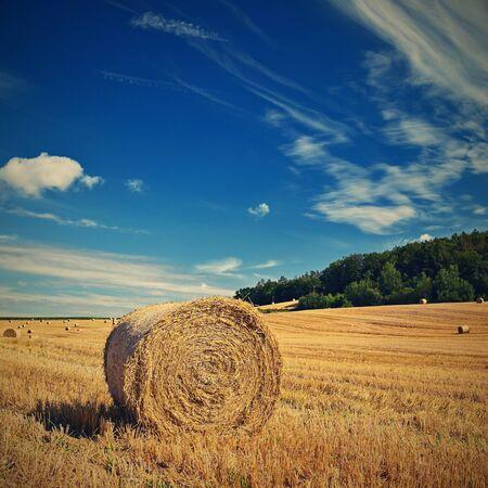 Schöne Sommerlandschaft. Landwirtschaftliches Feld. Runde Bündel trockenes Gras auf dem Feld mit blauem Himmel und Sonne. Heuballen - Heuhaufen.