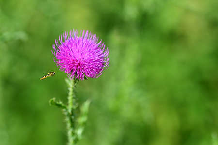 Nice colored thistle with blurred natural background. Stock Photo