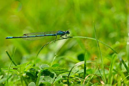 Beautiful dragonfly. Macro shot of nature. Libellula depressa. Insects close up.