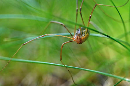 Beautiful macro shot of a spider in the grass. 스톡 콘텐츠