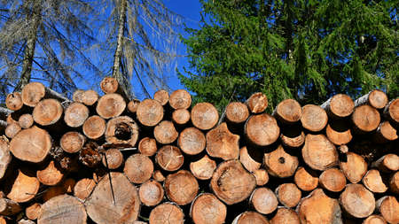 Logs of wood. Abstract nature background with wood in the forest. 版權商用圖片