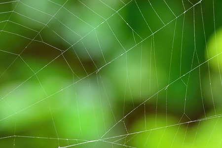 Beautiful background with spider web. Macro shot.