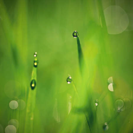 Nature - dew in the grass. Fresh green concept and abstract colorful background.
