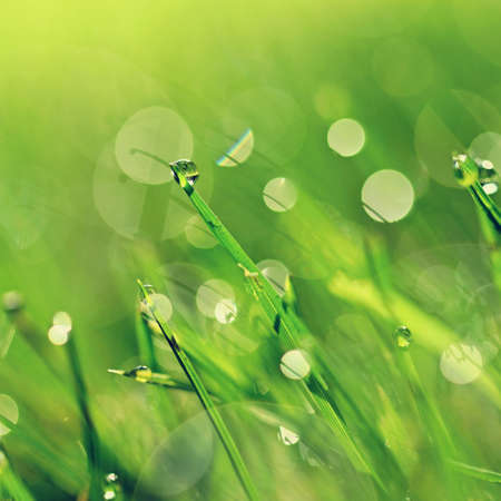 Spring nature. Dew in the grass. Fresh green concept and abstract colorful background.