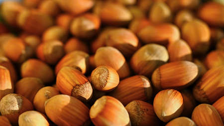 Background with hazelnuts. Healthy autumn nuts.
