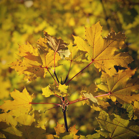 Autumn leaves. Natural seasonal colored background 版權商用圖片