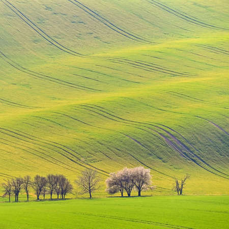 Beautiful spring landscape with green field. Flowering trees. Waves and hills with grass in Moravian Tuscany - Kyjov.
