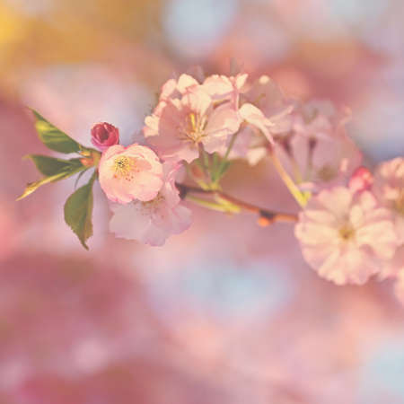 Spring background. Beautiful flowering tree with natural colors. Archivio Fotografico - 165694441