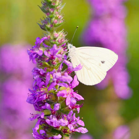 Beautiful blossom flowers with butterfly. Nature scene with sun in Sunny day. Spring flowers. Abstract blurred colorful background in Springtime. Stok Fotoğraf - 166250136