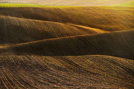 美丽的春天景色。波在场上-莫拉维亚托斯卡纳捷克共和国。图片