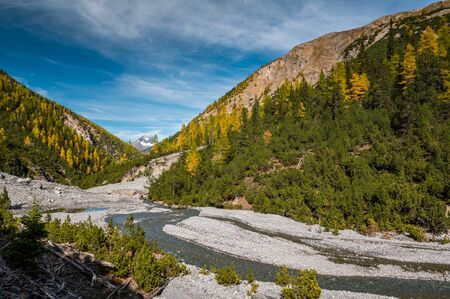wild, untamed river and larches in Val Cluozza in Swiss National Park