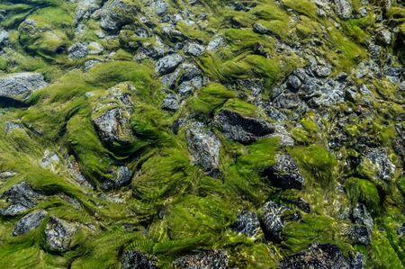 moss in Ova dal Munt mountain creek at Futschellas in Engadin