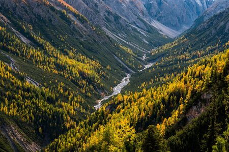 wild, untamed river and larches in Val Cluozza in Swiss National Park 版權商用圖片 - 132969365