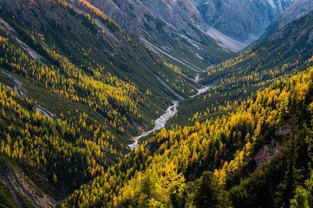 wilder, ungezähmter Fluss und Lärchen im Val Cluozza im Schweizerischen Nationalpark