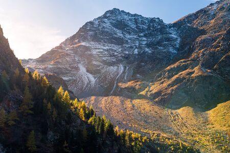 larici gialli in Val Zeznina