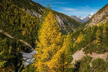 autumn larches in Val Cluozza
