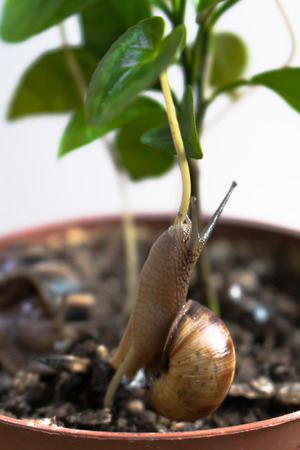 slithery: snail crawl and play in a pot with plant