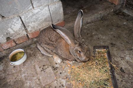 rabbit cage: Brown rabbit giant in cage close-up Archivio Fotografico