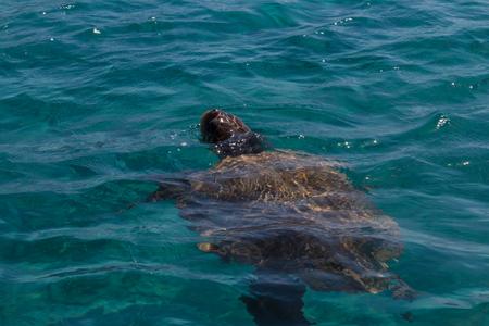 zakynthos: Caretta caretta turtle swim in the bay Laganas, Zakynthos, Greece Stock Photo