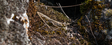 lizard in field: small lizard resting in the sun close-up Foto de archivo