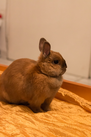 a little baby rabbit lying on the bed