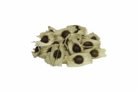 moringa oleifera seeds Stock Photo