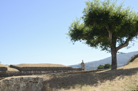 Tree on the fort of Valenca do Minho in Portugal. Stock Photo
