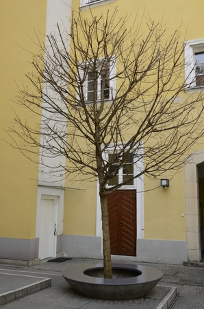 Tree without leaves in a patio of  the old town Graz, the capital of federal state of Styria, Austria.