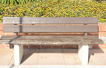 Wooden bench surrodended by yellow flowers at the promenade of Estepona, Malaga, Andalusia, Spain.