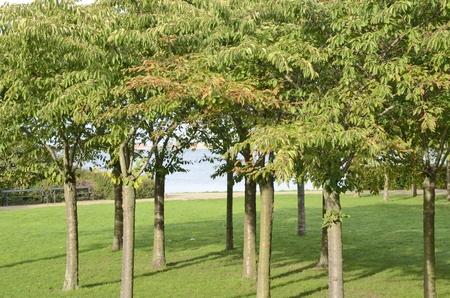 Green trees next to the sea at Langelinie park in Copenhagen, Denmark.