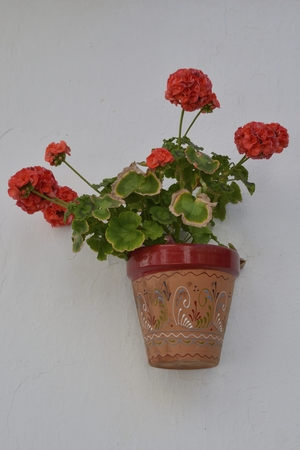Red geranium flower in pot on white wall in the streets of Benahavis, a  mountain village next to Marbella, Andalusia, Spain.