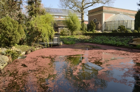 Reddish leaves on small at the botanical garden in Leuven, Belgium. Stockfoto